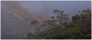 Misty morninng at Cradle Mountain photo print