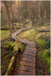Tasmanian wonderland photo print