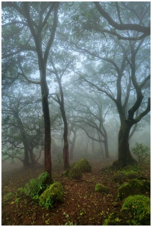 Forests of India landscape photo print