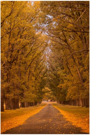 Golden Path autumn landscape photo print