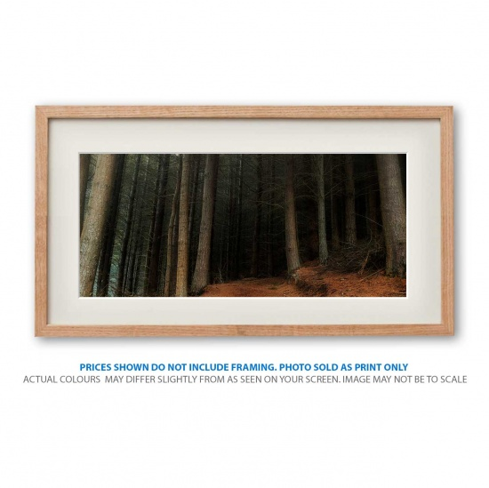 Fairytale forest landscape photo print in frame - display only