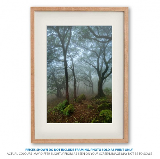 Forests of India landscape photo print in frame - display only