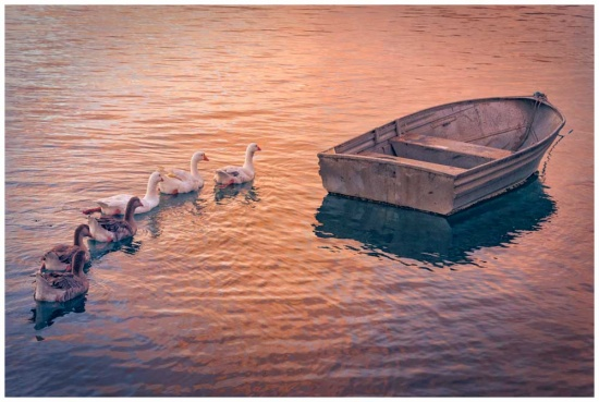 Ducks ready to travel photo print