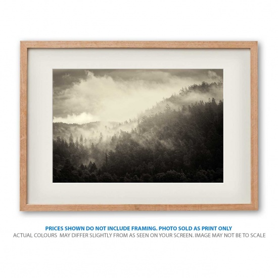 Misty morning in the forests photo print in frame - display only
