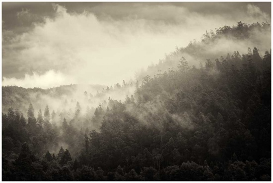 Misty morning in the forests photo print