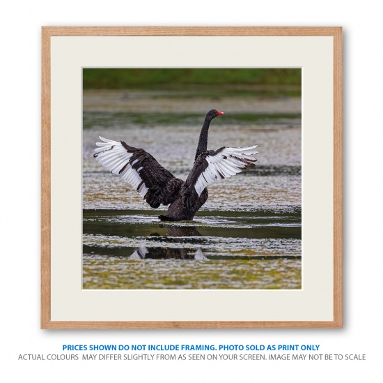 wildlife-photo22-framed