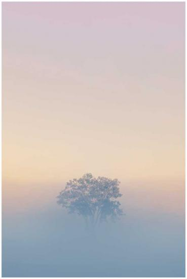 Last tree standing landscape photo print