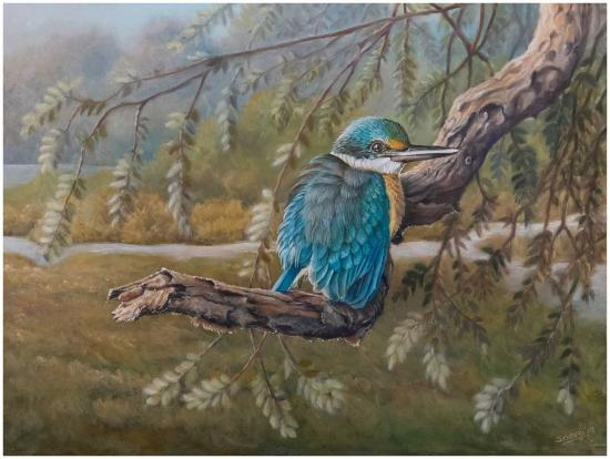 sacred-kingfisher-web