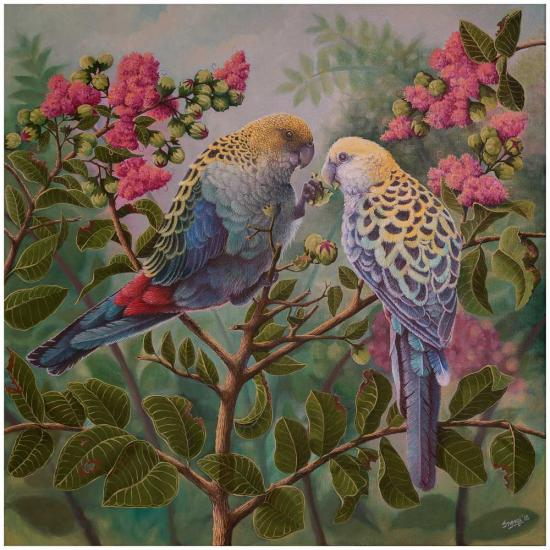 pale-headed-rosellas--two-souls_1422734540
