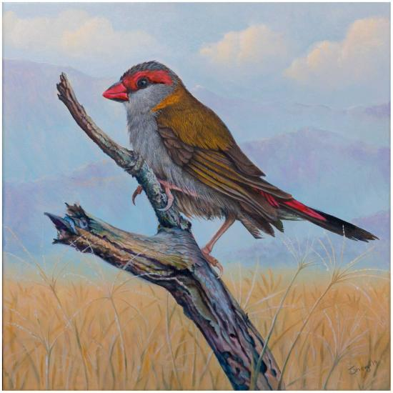 red-browed-finch-oil-painting